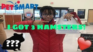 GETTING A HAMSTER! (Part 2)