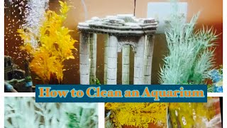 Let's Clean my Aquarium