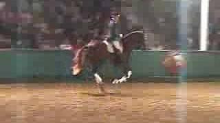 video of Beltoni