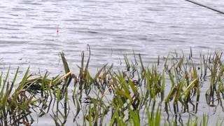 Карьер в никольском ленинградской области рыбалка