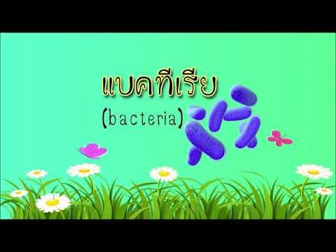 Helichrysum กับปรสิตในร่างกาย