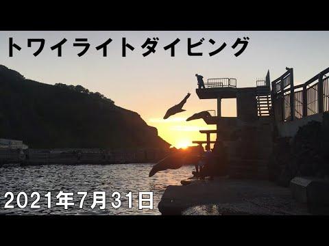 トワイライトダイビング 20210731