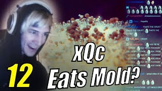 """xQc Reacts to """"Daily Dose of Internet"""" with Chat 