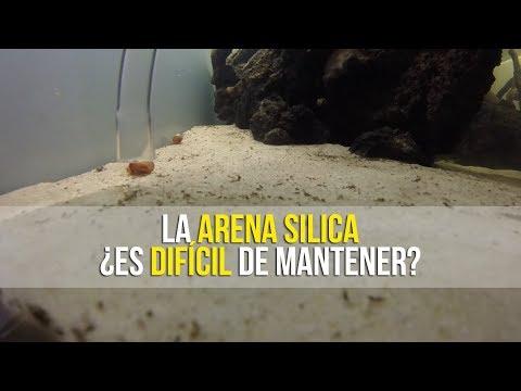CÓMO SIFONAR CON ARENA SÍLICA O ARENA DE SÍLICE | ACUARIOS DE TEHUACÁN