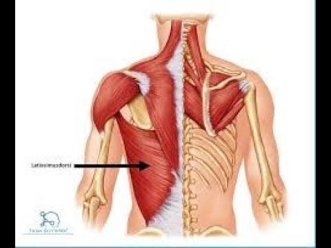 Ćwiczenia dla zwiększenia objętości mięśni pośladkowych