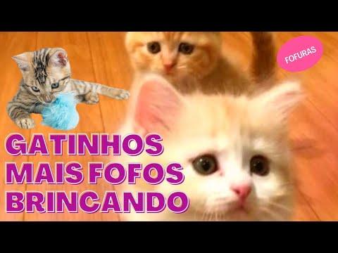 GATINHOS FILHOTES BRINCALHES MUITO FOFOS