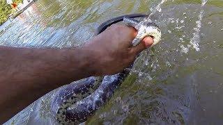 IT BIT ME!!! (Catching a BIG SNAKE While Bass Fishing) HERPING!