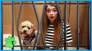 Descargar MP3 de Logan And The Box Fort Prison Escape / Logan The Adventure Dog