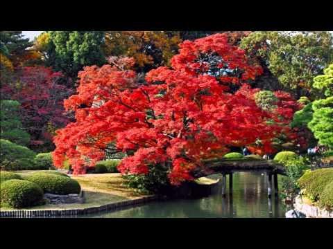 Удивительная красота природы и музыки