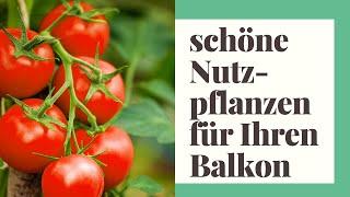 20 schöne Nutzpflanzen für Ihren Balkon