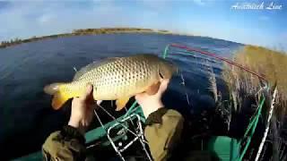 Прикормка из комбикорма для рыб