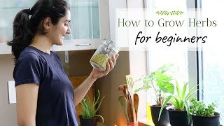 Plants You Can Grow From Kitchen Spices | Ep 1 | Grow With Me