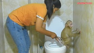 Adorable Monkey Kako Walking Carry Towel To Change Diaper In Toilet