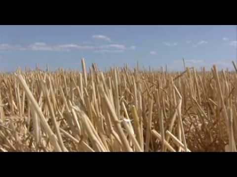 Montana Wheat Farmer: America's Heartland Series