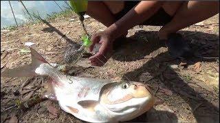 Đi câu cá mè - ngày chủ nhật may mắn