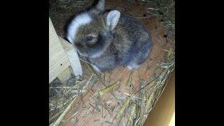 Süßer geht nicht! Kaninchenbabys vom  Hilderich