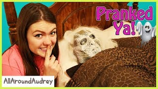 Family Fun Halloween Pranks! (Skit)/ AllAroundAudrey
