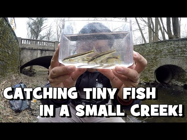 """Catching TINY FISH in a SMALL CREEK!!! The Search for the """"Waterfall Fish"""" begins! (Jenkintown, PA)"""