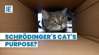 What does Schrödinger's Cat explain to us?