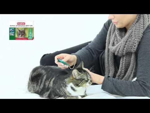 beaphar Zecken & Flohschutz SPOT ON Katze