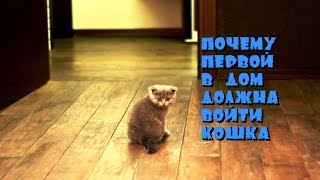 Магия кошек. Почему первой в дом должна войти кошка