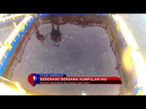Video Wisata Berenang Bersama Hiu di Pantai Bangsring, Banyuwangi - IMS