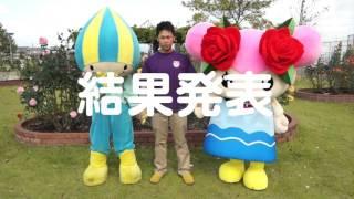どっちがキレイ!?神戸町のバラを撮れ!編