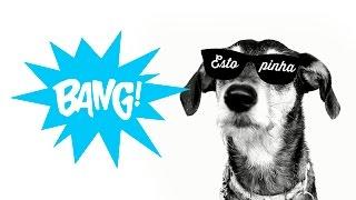 "Estopinha -  (Paródia) ""Bang! - Anitta"""
