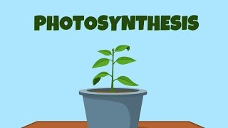 Learn about photosynthesis