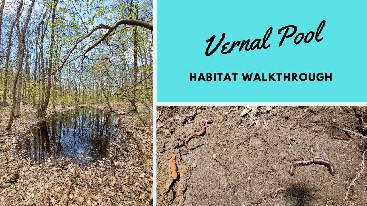 Habitats: Vernal Pool