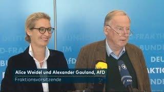 AFD JUBELT: Kauder-Desaster ist Anfang von Ende der Merkel-Regierung