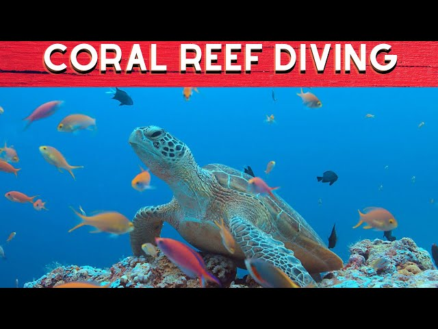 7 Most Amazing Coral Reef Diving Sites In The Philippines