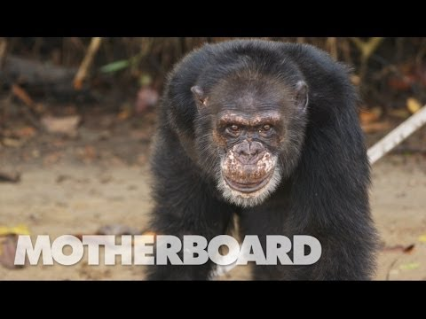 Monkey E-cards, Our crew traveled to remote Liberia to discover..