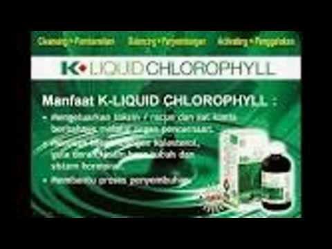 Video 0857 0202 6767, KLOROFIL K-Link, EFEK SAMPING Klorofil, PENGERTIAN Klorofil
