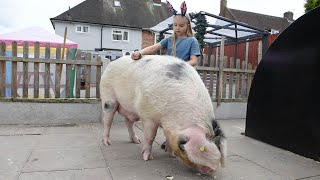 Adorable Girl Is Best Friends With Giant Pig