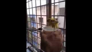 Love Birds are taking a Bath
