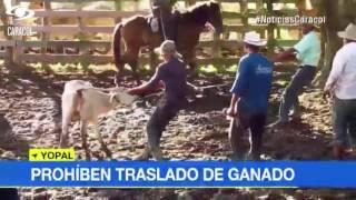 Prohibido el traslado de ganado en Arauca y Casanare