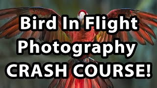 Bird In Flight Photography - Crash Course!