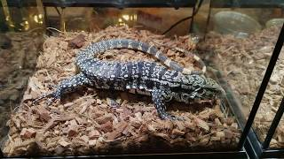 CRAZY NYC REPTILE SHOW (BIG SNAKES, LIZARDS, AND MORE) [WHITE PLAINS]