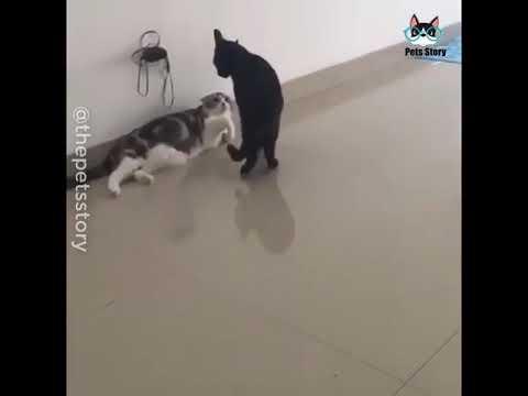 Братья наши меньшие! Кошки!