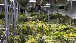 Another Ohio City Says It Will No Longer Enforce State's Misdemeanor Marijuana Law