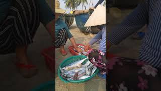 Chồng đánh cá, vợ bán cá. Đời sống văn hóa biển #Shorts
