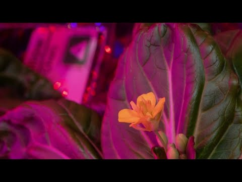 NASA astronaut grows vegetables in space