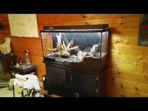 mp4 Geek Aquarium, download Geek Aquarium video klip Geek Aquarium