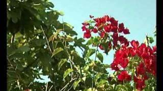 Vivaldi - Autumn Flowers - Flores Do Outono