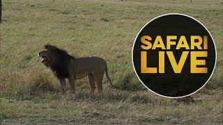 safariLIVE - Sunrise Safari - August 6, 2018