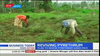 Nakuru County Pyrethrum farmers get a boost from Governor Lee Kinyanjui