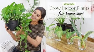 Grow with Me - Indoor Plants from Cuttings  | Ep 4