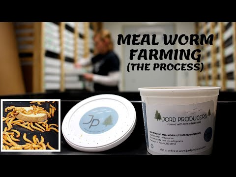 , title : 'Meal Worm Farming(The PROCESS)