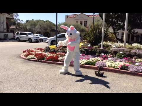 video:Easter Bunny Preparing for Big Day at Chaminade Resort & Spa